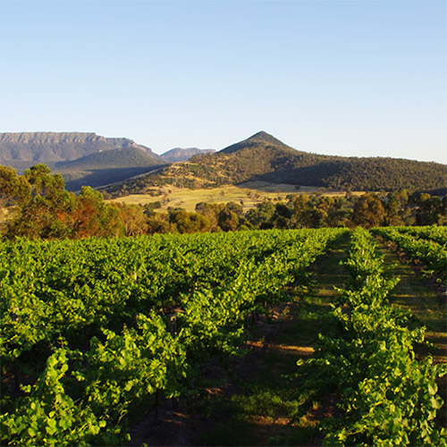 Grampians Estate Winery Tour photo